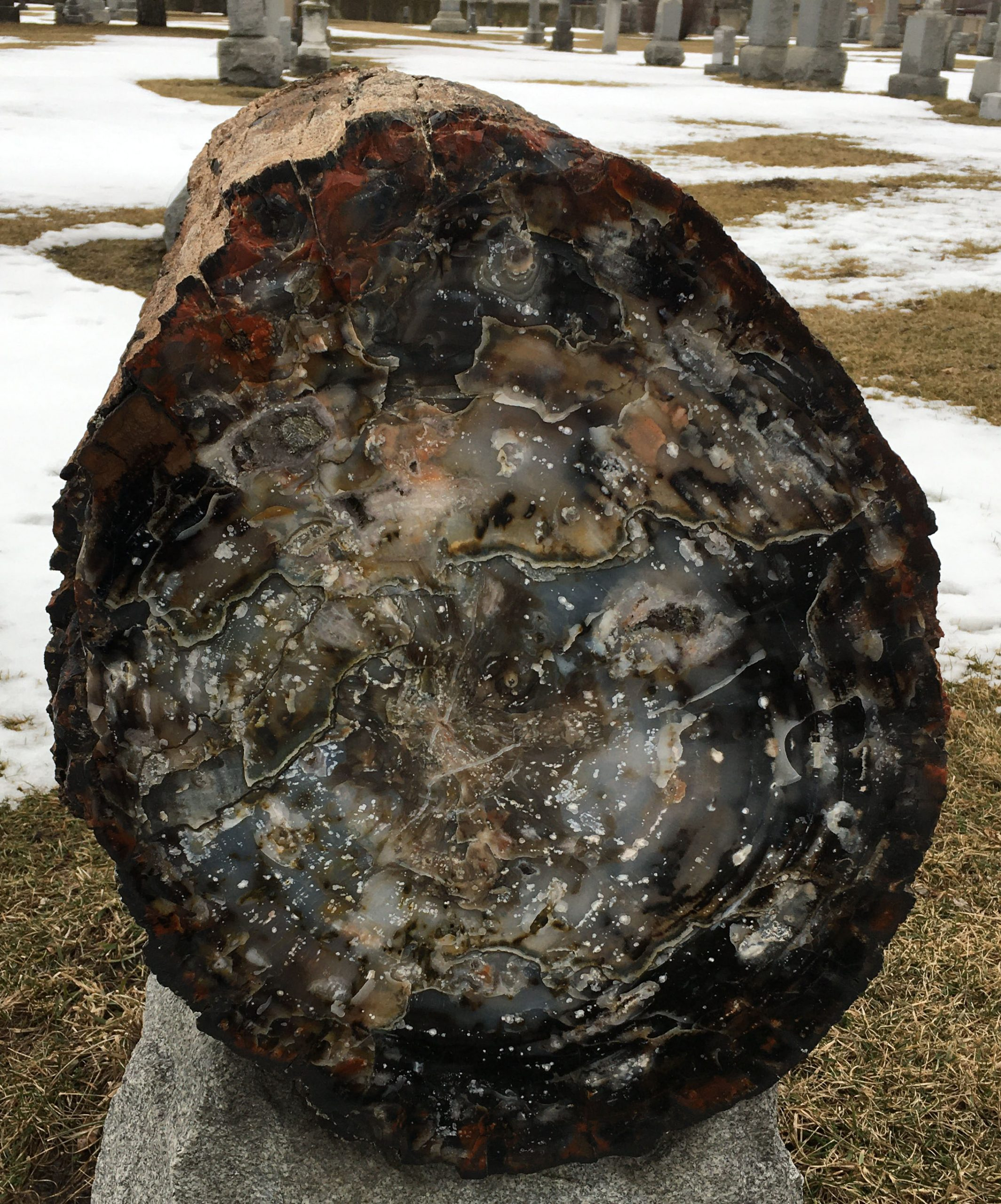 Cross Section Petrified Wood Headstone